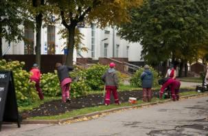 В Смоленске высадили голландские тюльпаны