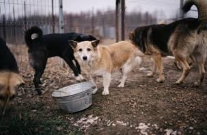 Почему собак нельзя кормить макаронами и хлебом