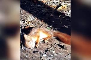 Смоляне до смерти закормили белок в парке Рославля
