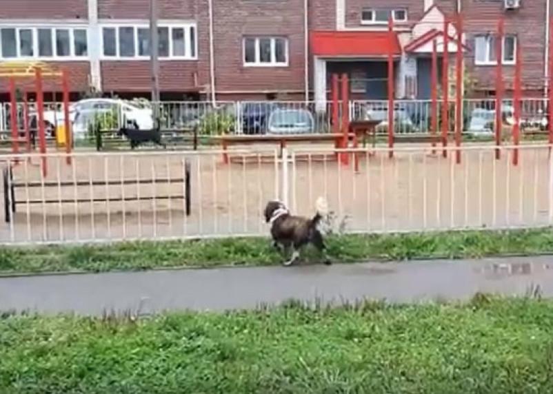 «Ситуация вышла за рамки сосуществования». Собаки продолжают кошмарить смолян в Промышленном районе