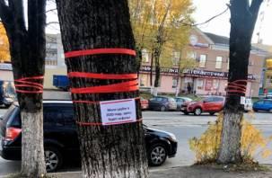 «Не благодарите». Сколько деревьев вырубят в рамках нацпроекта на улице Николаева?