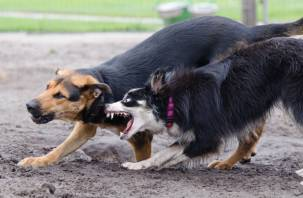Бродячие собаки нападают на жителей Десногорска