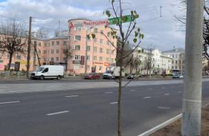 В Смоленске на проспекте Гагарина появляются новые деревья и кусты