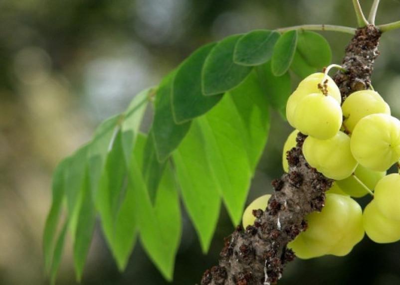 Назван фрукт, избавляющий от жира на животе