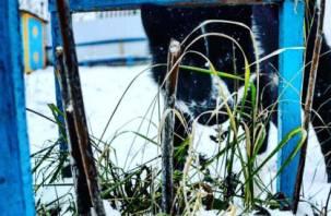 На Смоленщине за 2019 год вакцинировали свыше двух миллионов животных