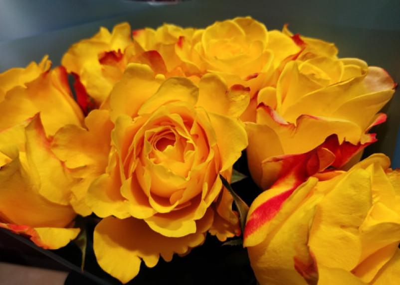 Новый год без романтики. Россельхознадзор уничтожит розы следовавшие из Беларуси в Москву