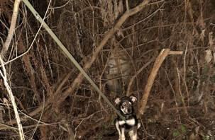 В Смоленской области неизвестные привязали щенка к дереву и бросили