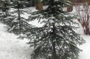 Новогодняя ёлка может обойтись смолянам в четыре тысячи рублей
