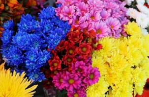 На Смоленщину пытались ввезти цветы с трипсом