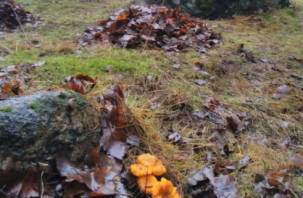 В Рославле выросли грибы