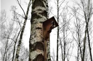 Ботинок на дереве. В Смоленске появился необычный скворечник