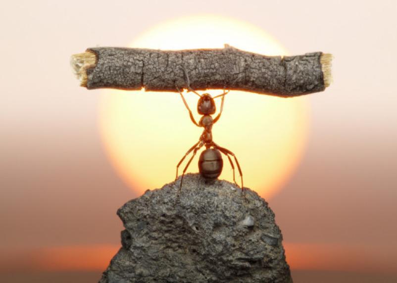Смоленские муравьи принесли в Тверскую область новый вид растения