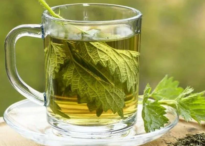 Чай из крапивы снижает давление