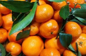 В Роскачестве рассказали о проблеме новогодних мандаринов