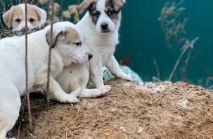 Неравнодушные смоляне ищут щенкам дом и любящих хозяев