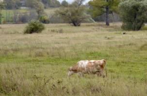 Смоленские коровы должны давать норму молока, чтобы их хозяева получили субсидию
