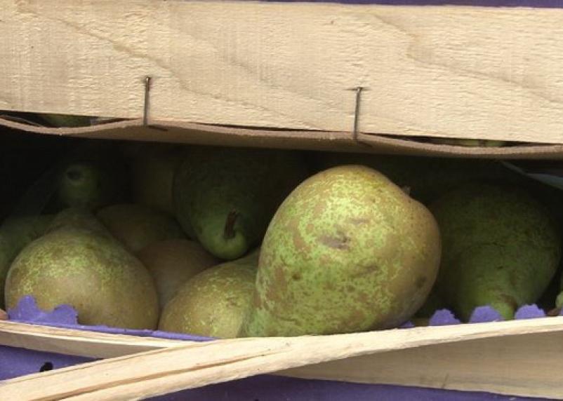 На Смоленщину пытались ввезти 50 тонн нелегальных груш