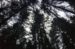 Жителя Велижского района поймали на вырубке сосен
