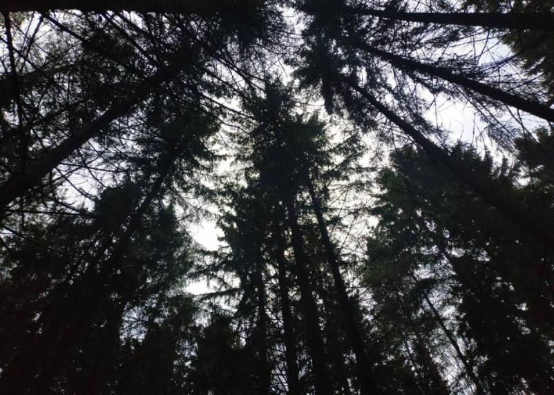 В Смоленской области высадят около 3 га леса в память о погибших у переправы на Днепре