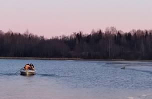 Оказалась в ледяной воде. В Смоленском районе спасли молодую косулю