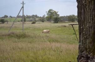 В Смоленской области берегут и совершенствуют породу