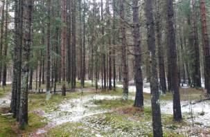 Избили, прокололи грудь отверткой и спрятали в лесу. Трое смолян ответят за убийство товарища
