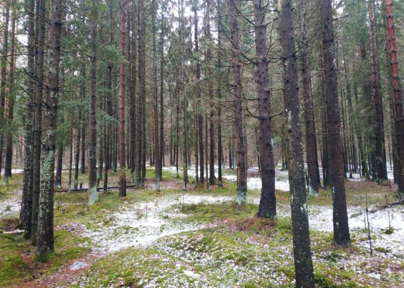 В Смоленской области в канун Нового года пропал человек