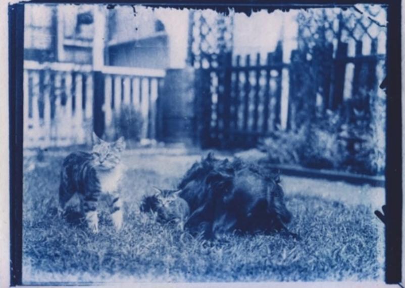 Фотографиям 120 лет. В Сети появились снимки котов из «капсулы времени»