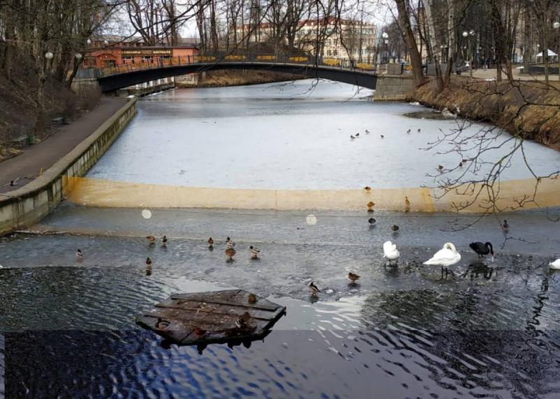 В Смоленске у лебедей исчезли домики