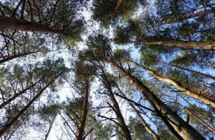 Мешали. Смолянин спилил кучу деревьев, чтобы проехать в лес