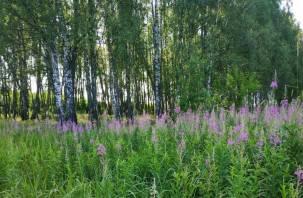 Москвич за вырубку деревьев в Вяземском районе ответит в суде
