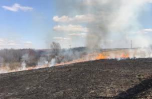 В Смоленской области «весенние» поджоги травы начались уже в феврале