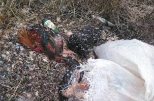 В Смоленске выбросили мешок с мертвыми курами
