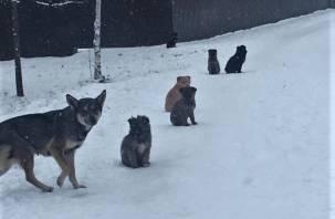 Хозяин умер. В Вяземском районе 15 щенкам ищут дом