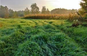 Передышка для природы, или Как коронавирус влияет на экологию