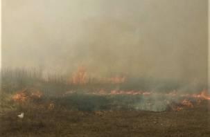 Эксперт объяснил, почему в России увеличилось число лесных пожаров