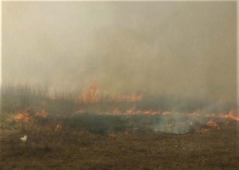 В Смоленской области пожарные ликвидировали крупный лесной пожар