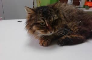 В Смоленском районе нашли кошку с пулевым ранением