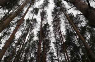 В Смоленской области задержан подозреваемый в хищении 28 млн рублей из госпрограммы