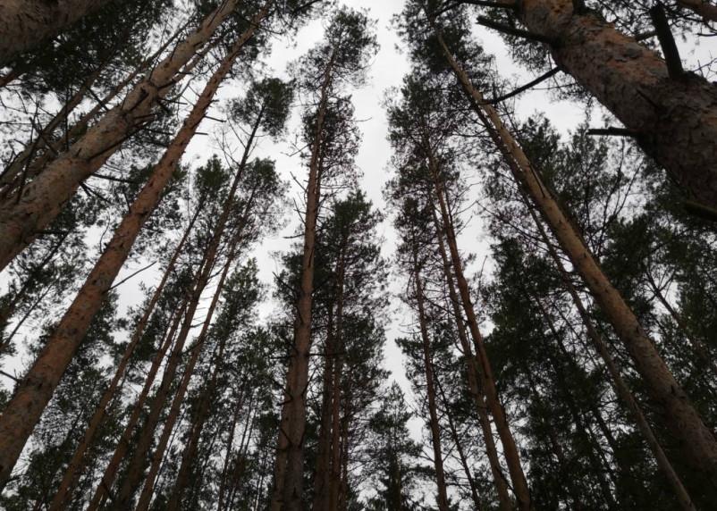 Ловкий вор скрывался в лесу и жил в землянке. Полицейские его нашли благодаря кабелю