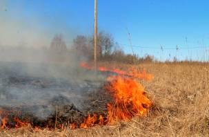 Из-за палов травы в Смоленской области выгорели более 2 тыс. гектаров