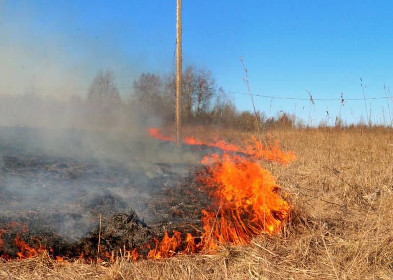 Смоленская область «в огне». В регионе продолжают поджигать траву