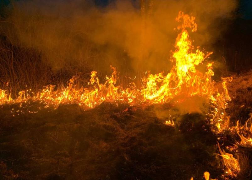 В Дорогобужском районе горел лес площадью 4 га