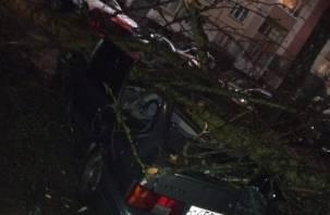 В Смоленске деревья рухнули на машины