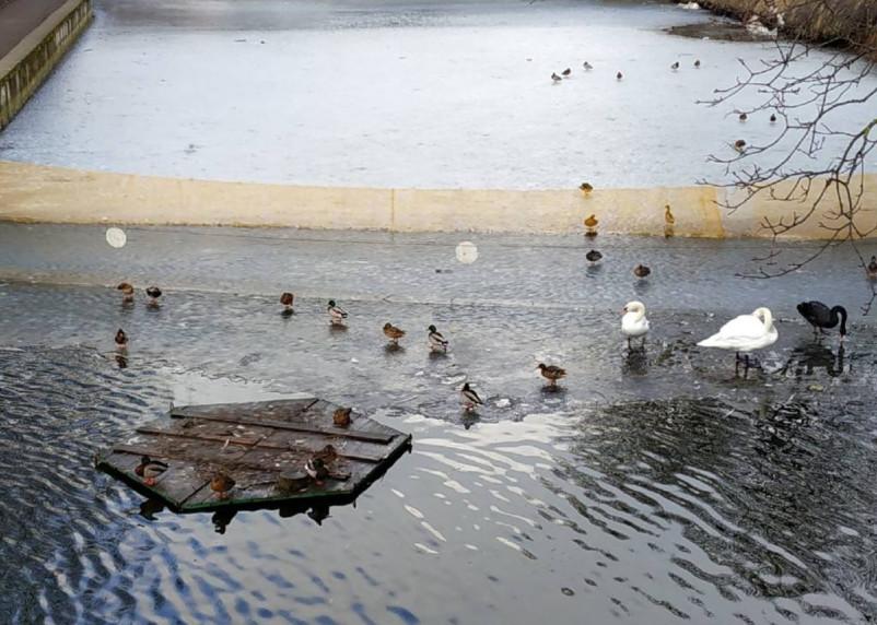 В мэрии рассказали, куда исчезли домики для лебедей