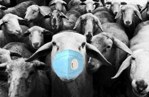Вирус паники и беспорядочное движение баранов