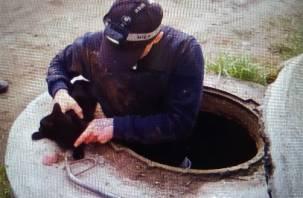 Под Смоленском спасли кота, который угодил в канализационный люк