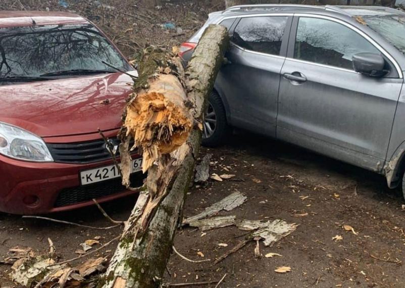 Последствия стихии: в Смоленске деревья рухнули на автомобили и обесточили дома