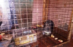 В Рославле пожарные спасли енота из горящей квартиры