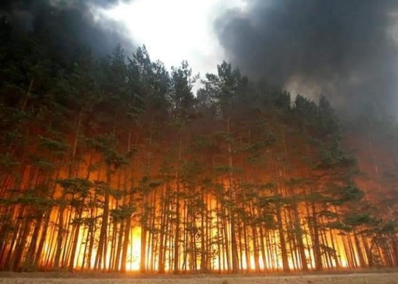 Гидрометцентр назвал причины масштабного чернобыльского пожара
